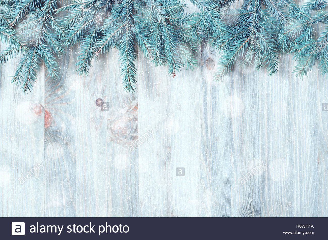Winter Christmas and New year background Blue fir tree branches 1300x953