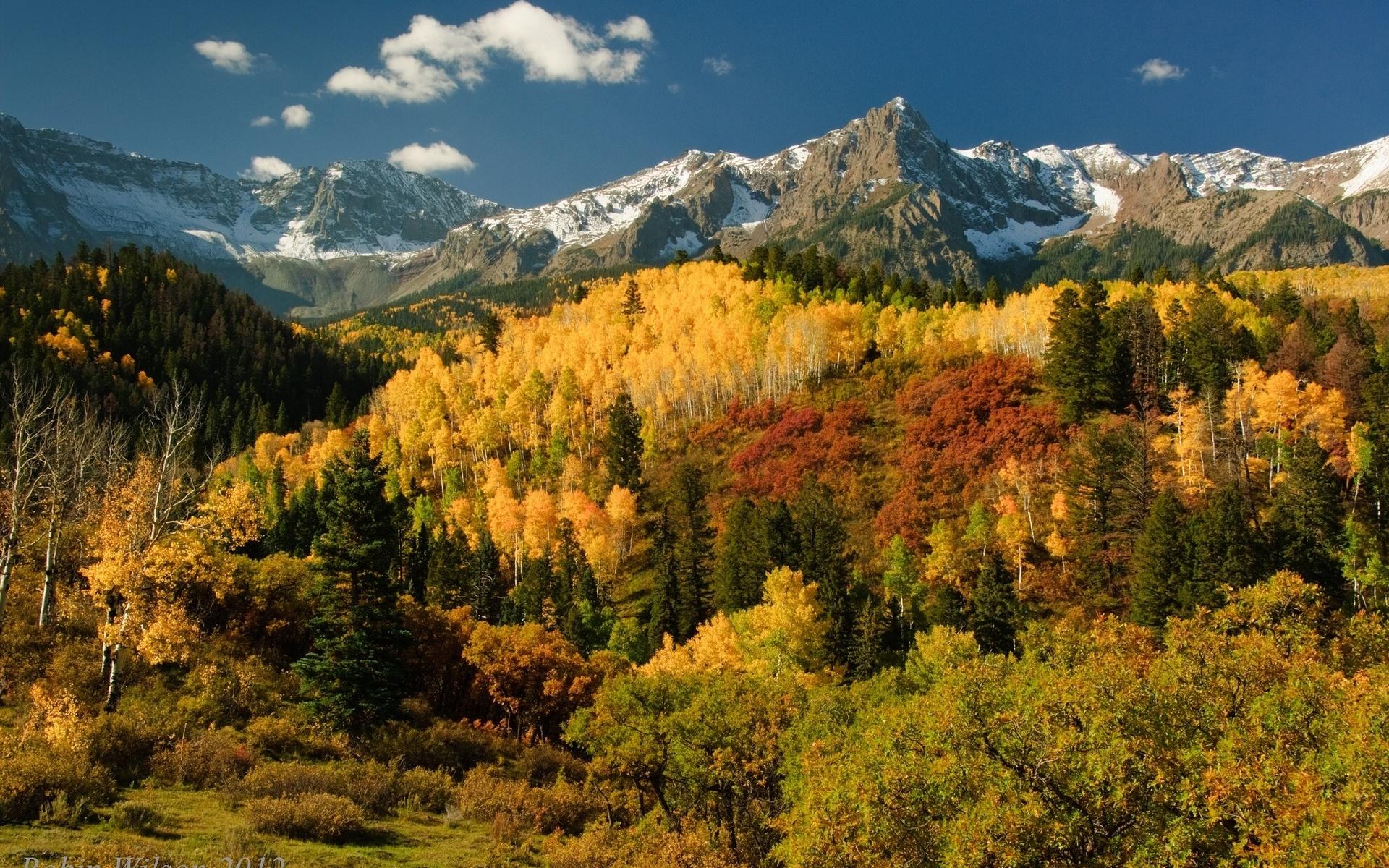 forest autumn fall sky wallpaper 1920x1200 30434 WallpaperUP 1920x1200
