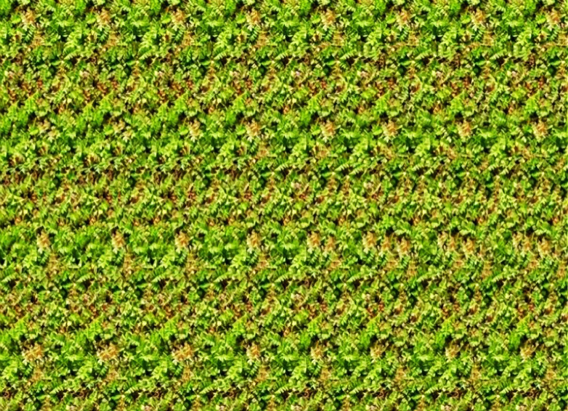 Stereogram Wallpaper 1900x1375 Stereogram 1900x1375