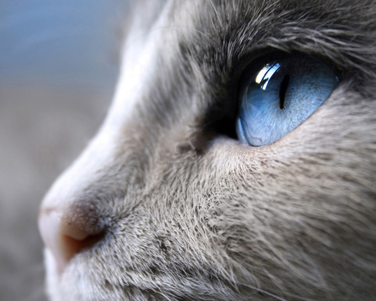 Cat Eyes Wallpapers Blue Cat Eyes Yellow Cat Eyes Green Red Cats 1280x1024
