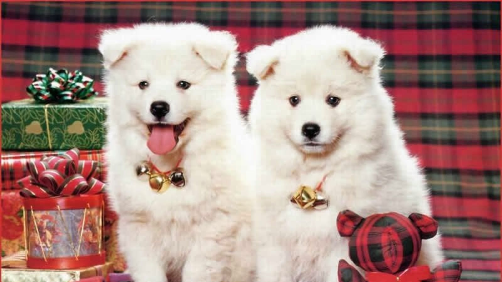 Beautiful dogs images hd wallpapers for desktop HD 1600x900