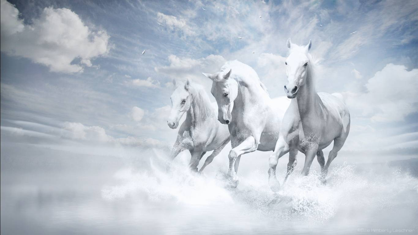 white horse wallpaper   AmusingFuncom Pictures and Graphics for 1366x768