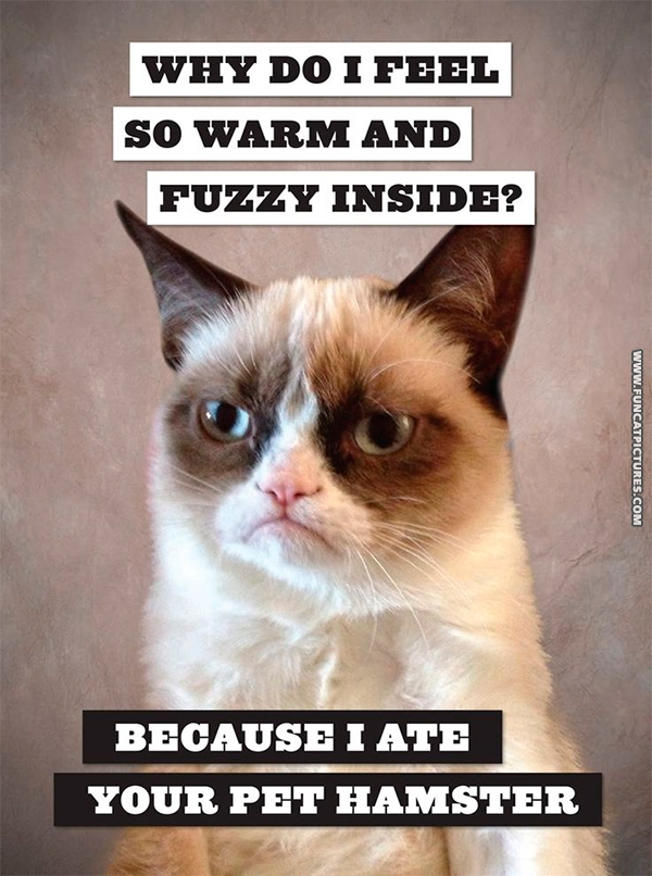 Grumpy feels warm and fuzzy Fun Cat Pictures 600x806