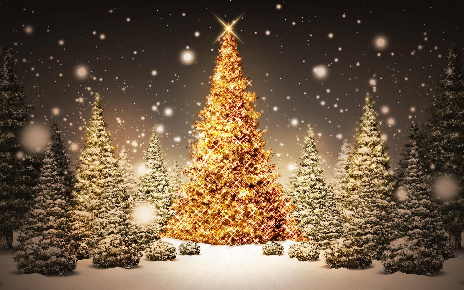 77 Free Christmas Tree Wallpaper On Wallpapersafari