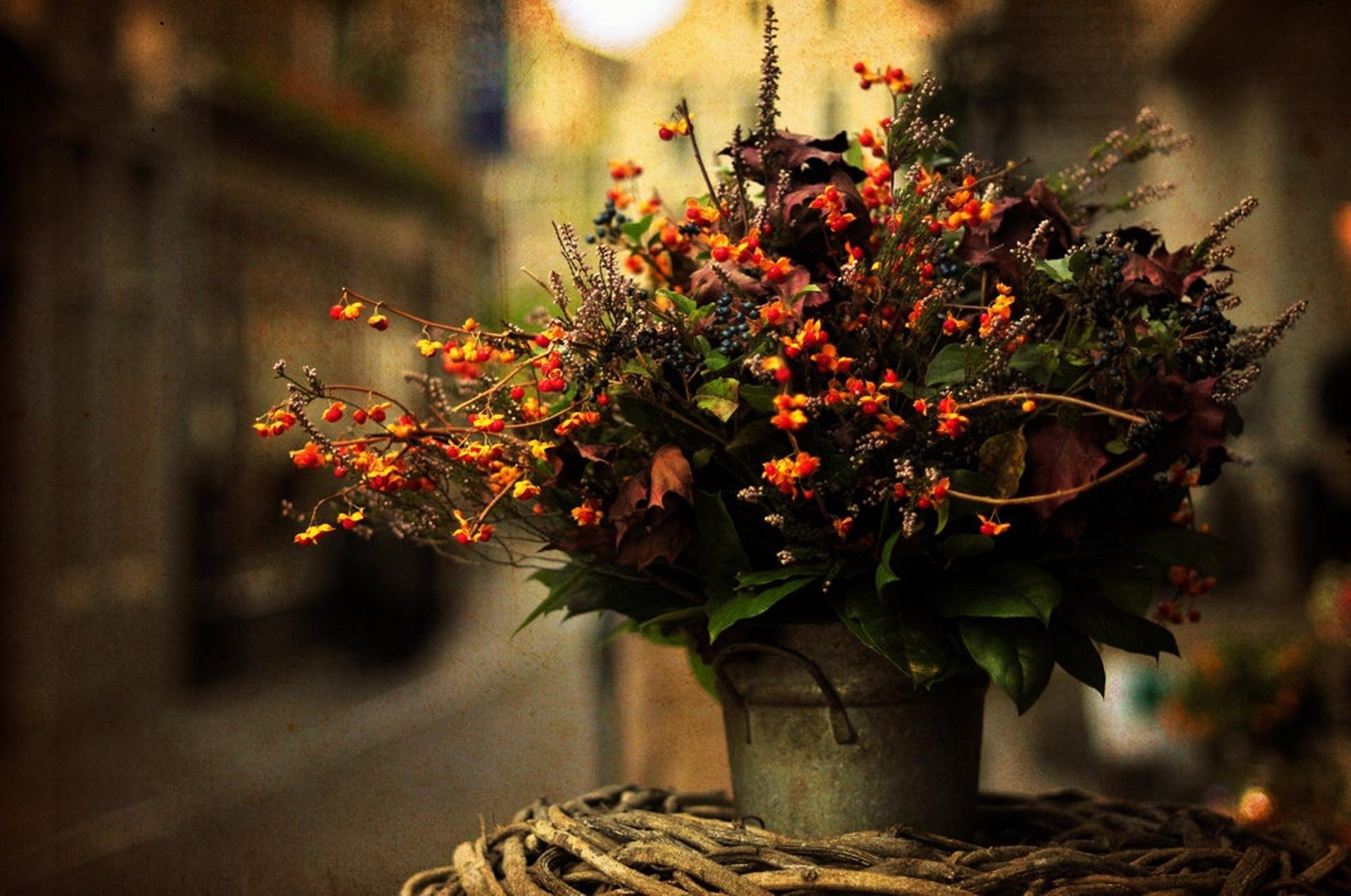 природа цветы ведро  № 464627  скачать