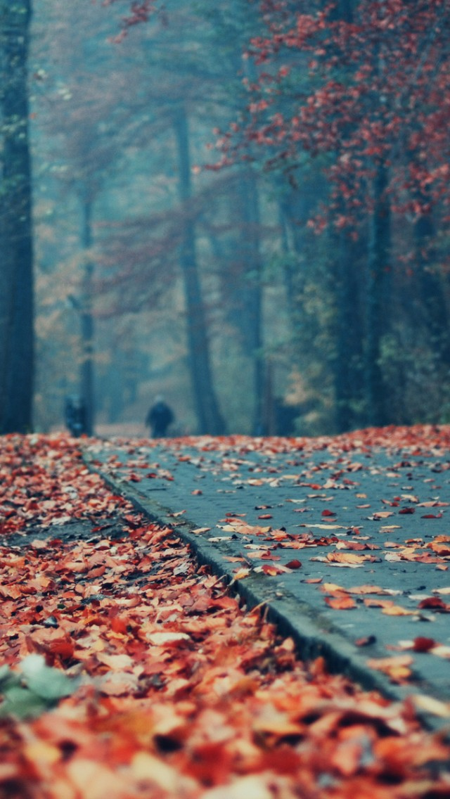 Deck Autumn Leaves iPhone 5s Wallpaper Download iPhone Wallpapers 640x1136
