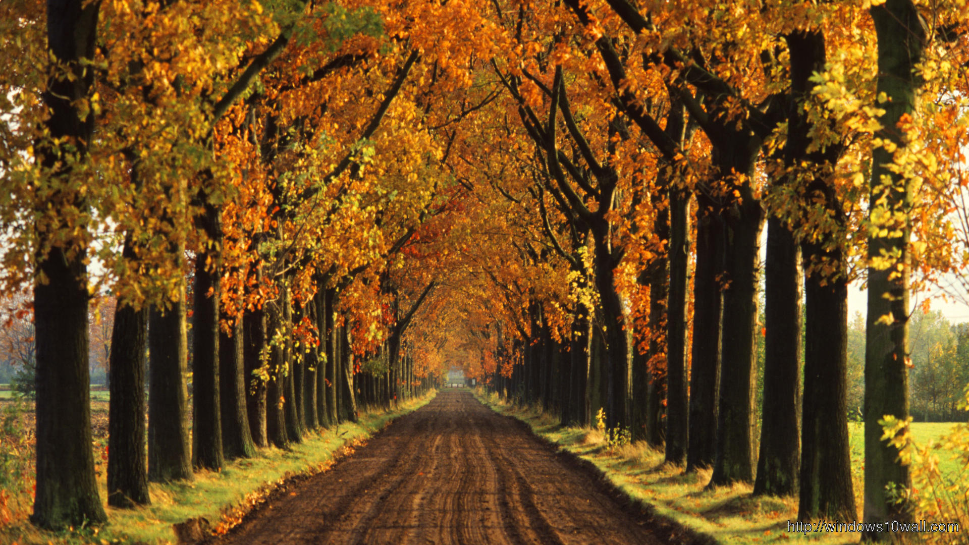 Free Download Autumn Tree Street Wallpaper Windows 10 Wallpapers 1920x1080 For Your Desktop Mobile Tablet Explore 71 Fall Trees Wallpaper Fall Wallpaper Backgrounds Free Fall Wallpapers Fall Wallpaper For Computer