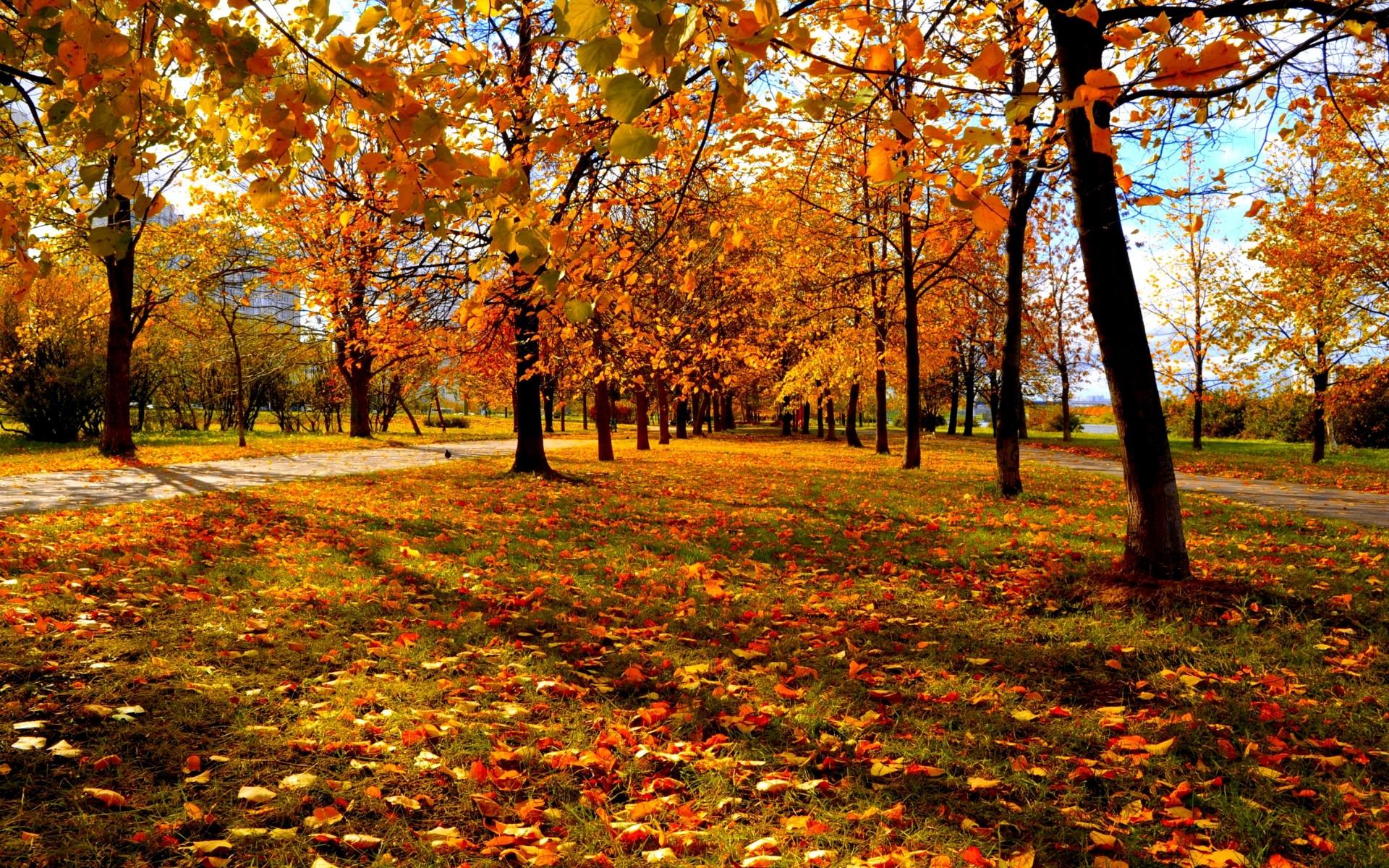 Fall Trees Background wallpaper 1920x1200 29981 1920x1200