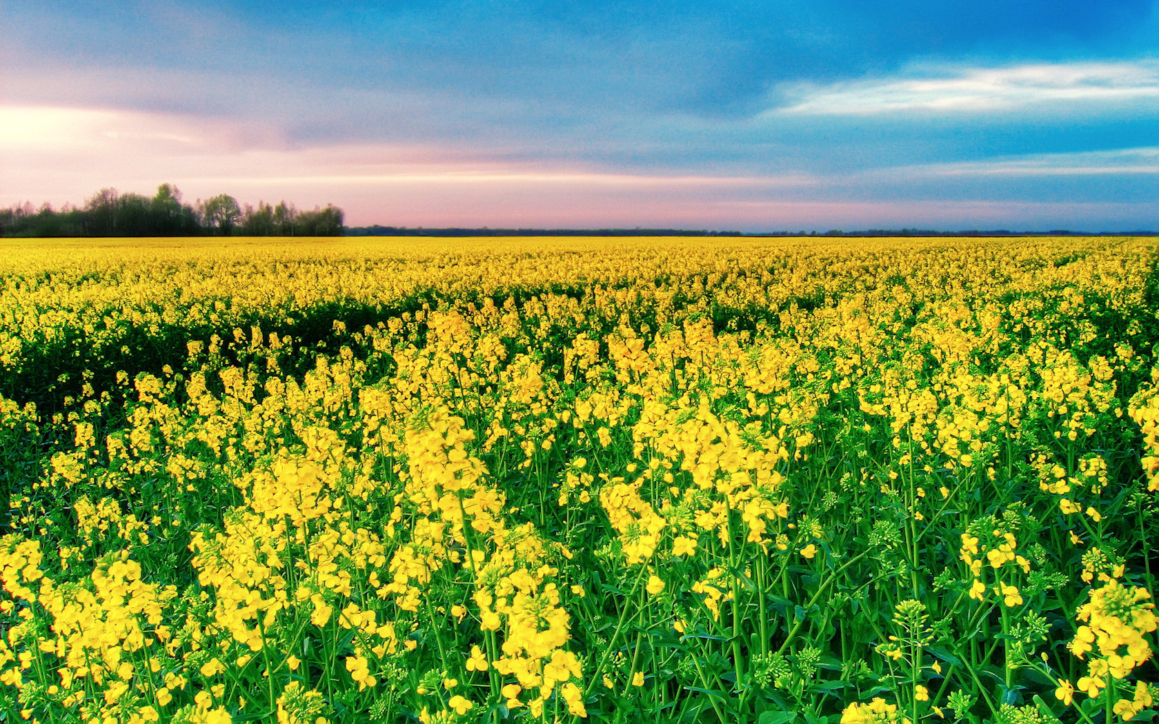 Imagini cu flori din natura camp cu flori Wallpapereorg 1680x1050