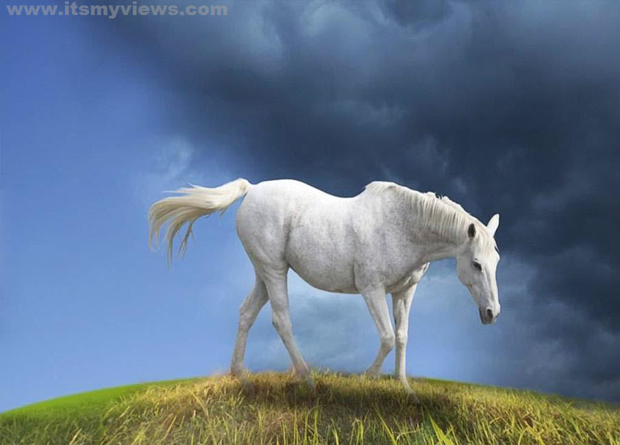 itsmyviews.com » Latest best Horses HD widescreen pictures 2012