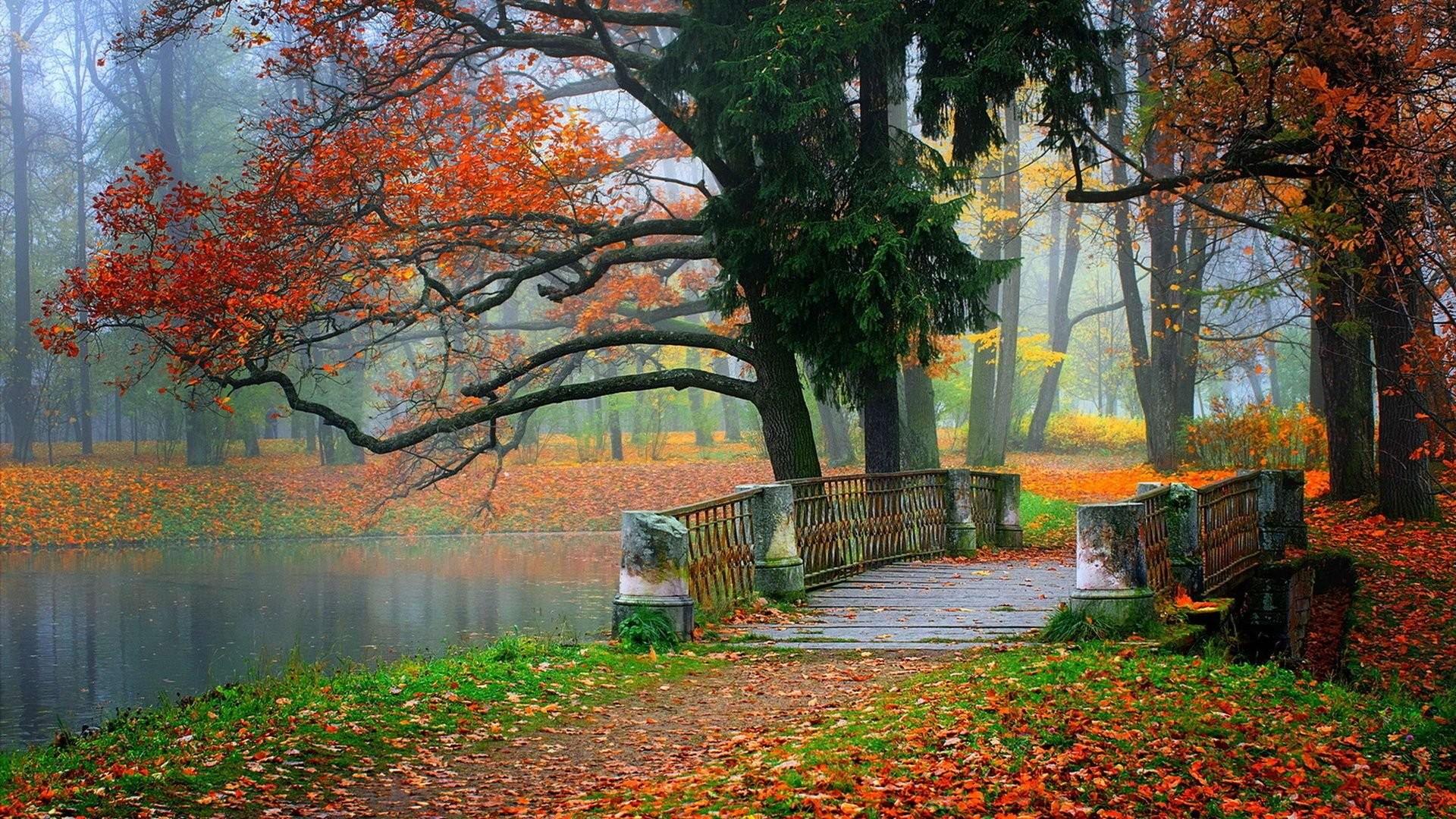 Autumn HD Landscape Wallpapers Beauty Tree Bridge Tablet 1920x1080