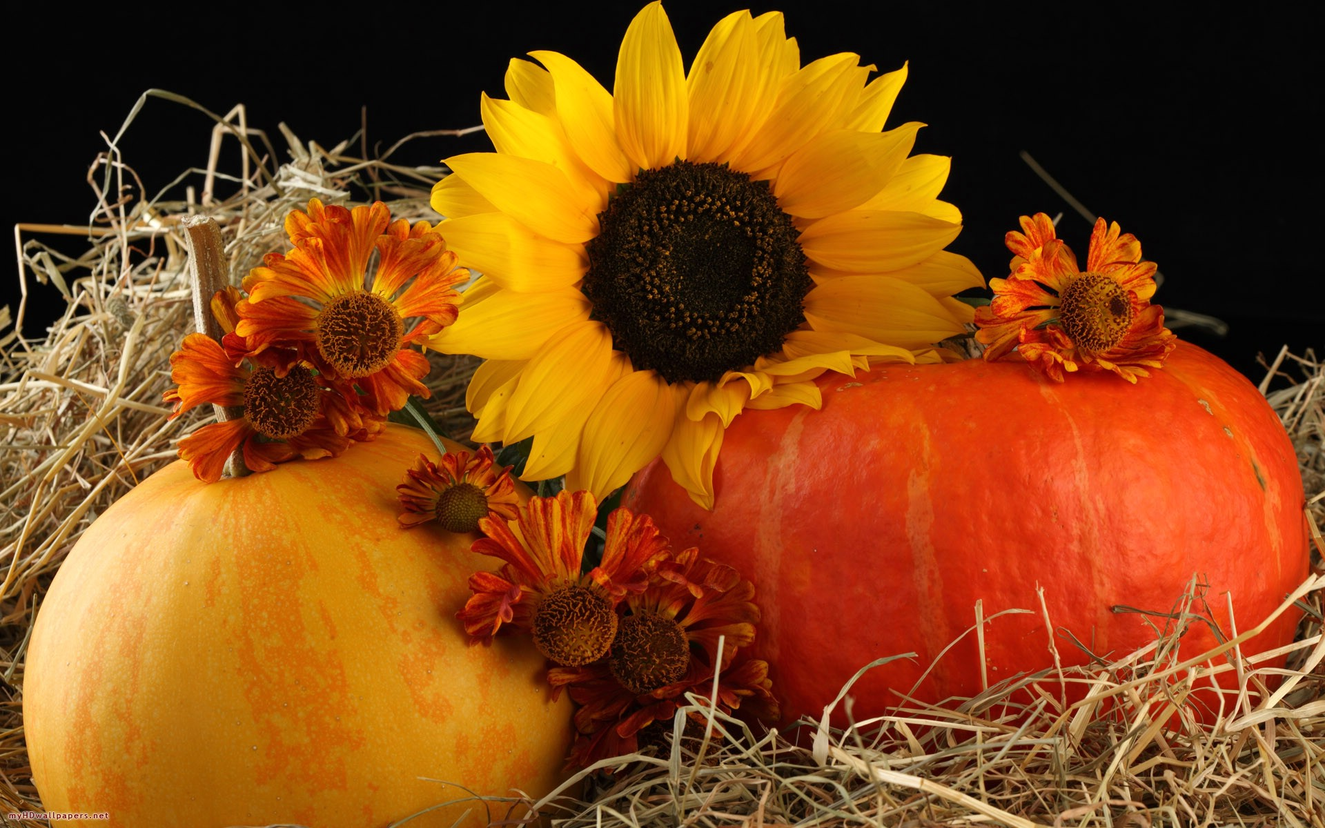 sunflower and pumpkins free desktop wallpaper hd wallpapers