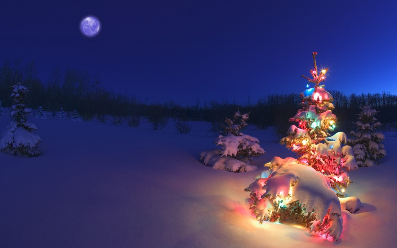 1280x800 Christmas tree in the snow desktop PC and Mac wallpaper 1280x800
