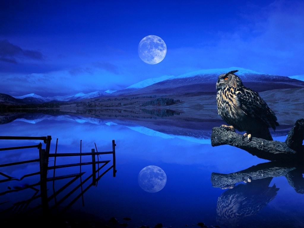 Random Blogs Beautiful Night of Sky Wallpapers 1024x768