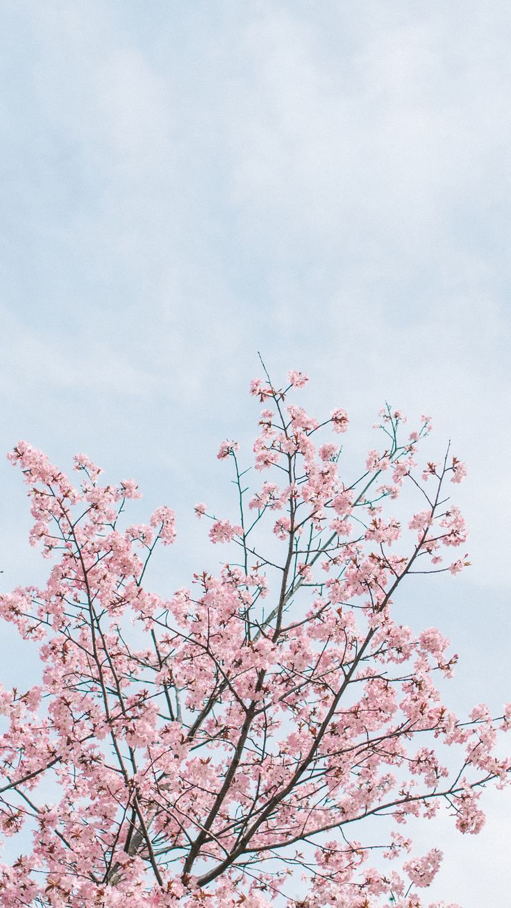 Blossom Wallpapers IG Stories Templates   Blossom 736x1308