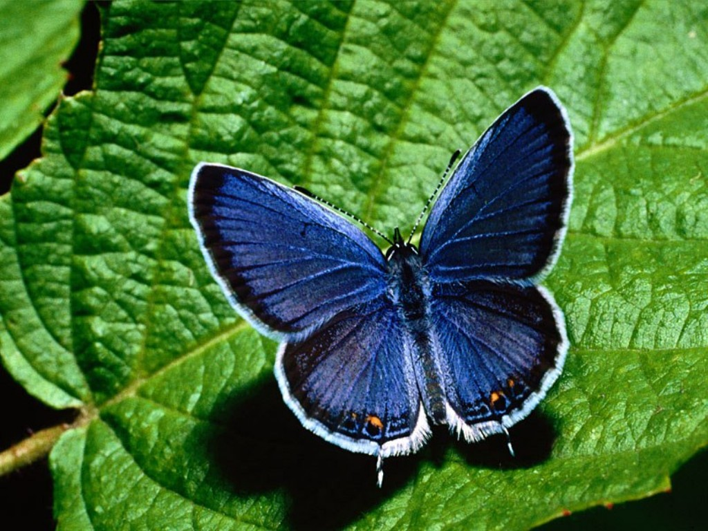 Butterfly Wallpaper 10589 Hd Wallpapers in Cute   Imagescicom 1024x768