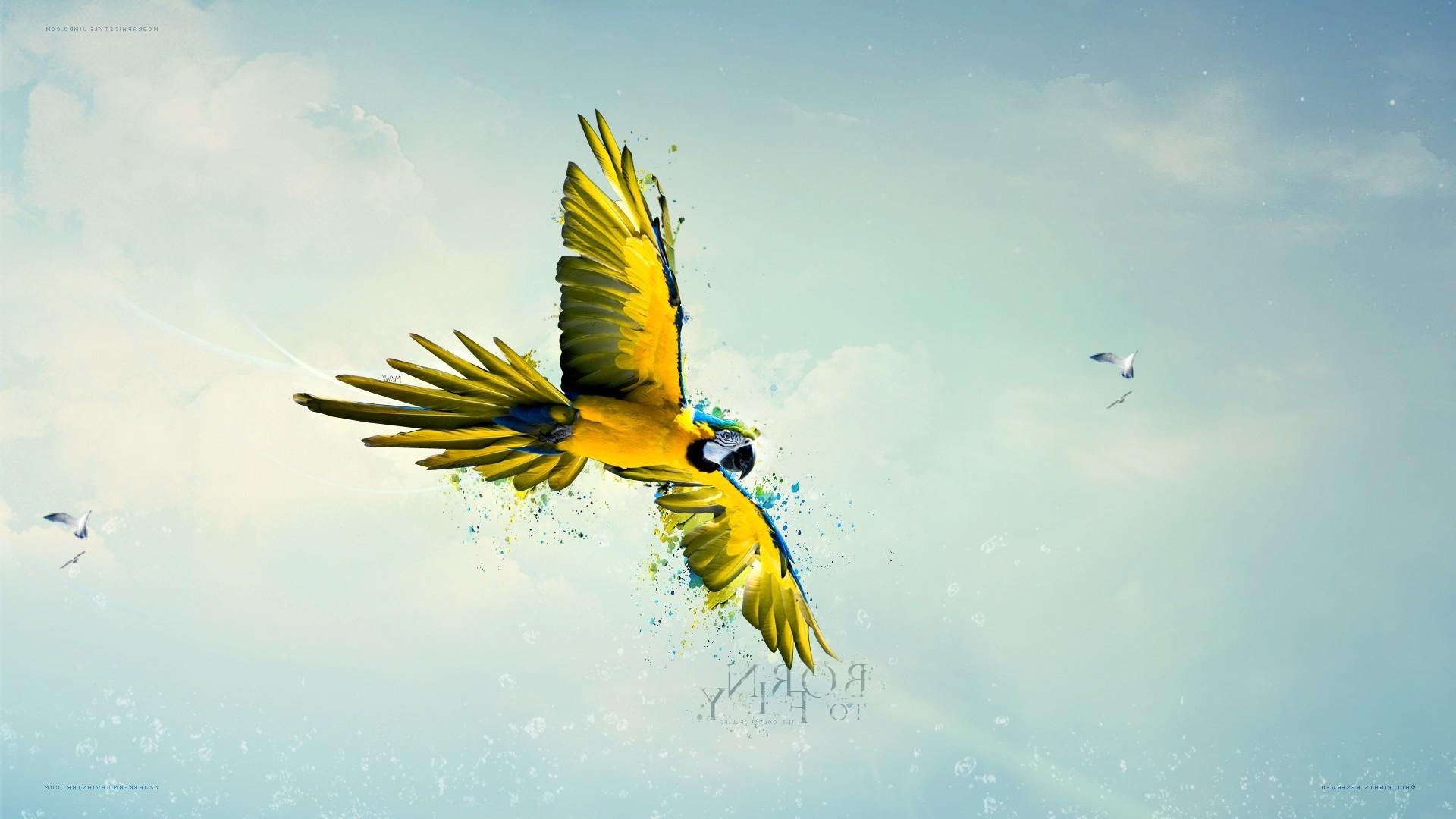 macaws birds sky parrot flying paint splatter Wallpapers HD 1920x1080