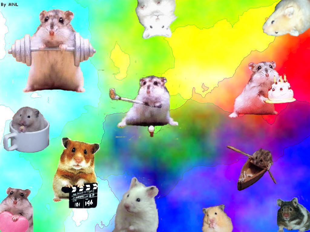 download Hamsters wallpapers Hamsters background [1024x768 1024x768