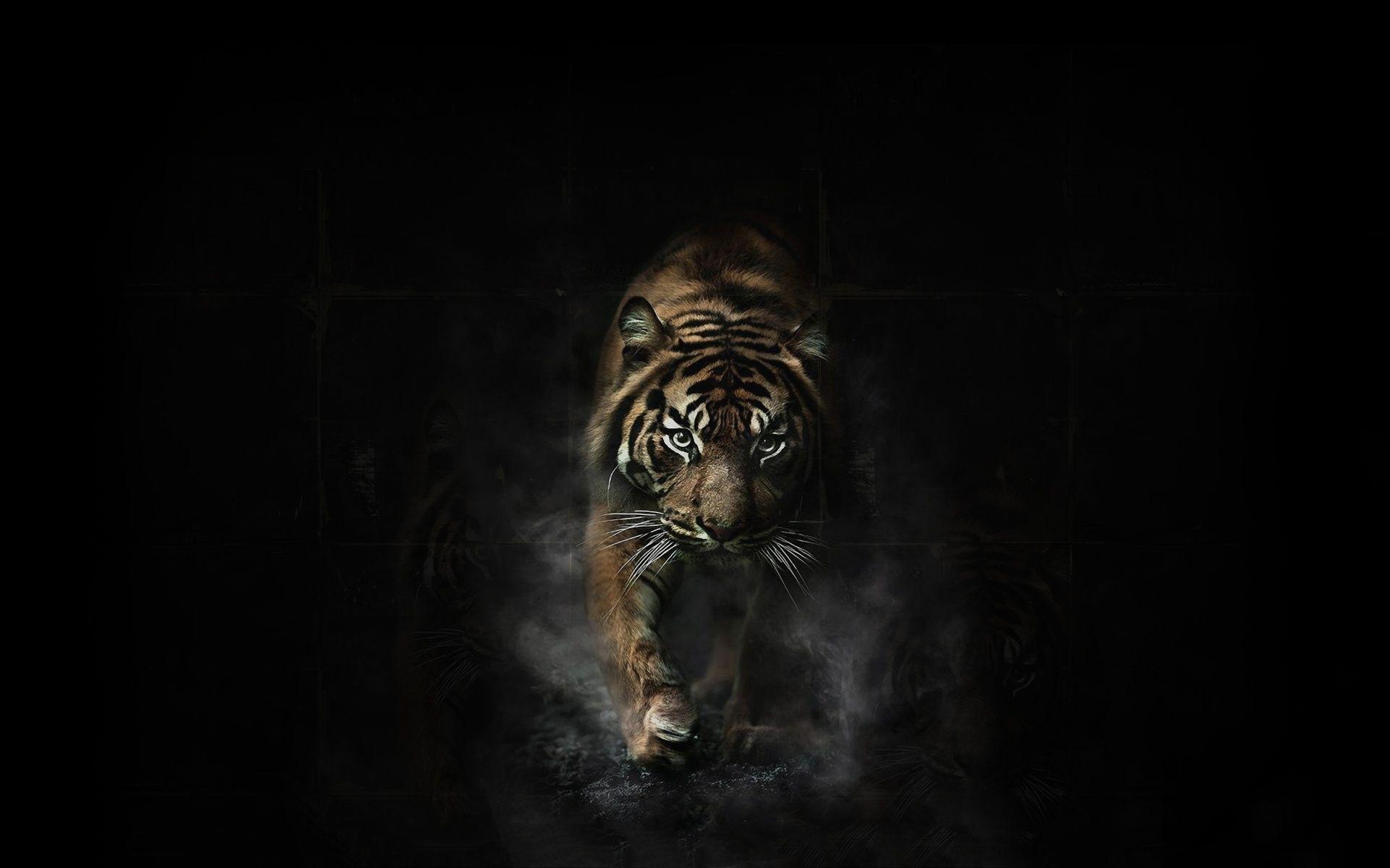 Beautiful Black Tiger Eyes Wallpaper Pictures