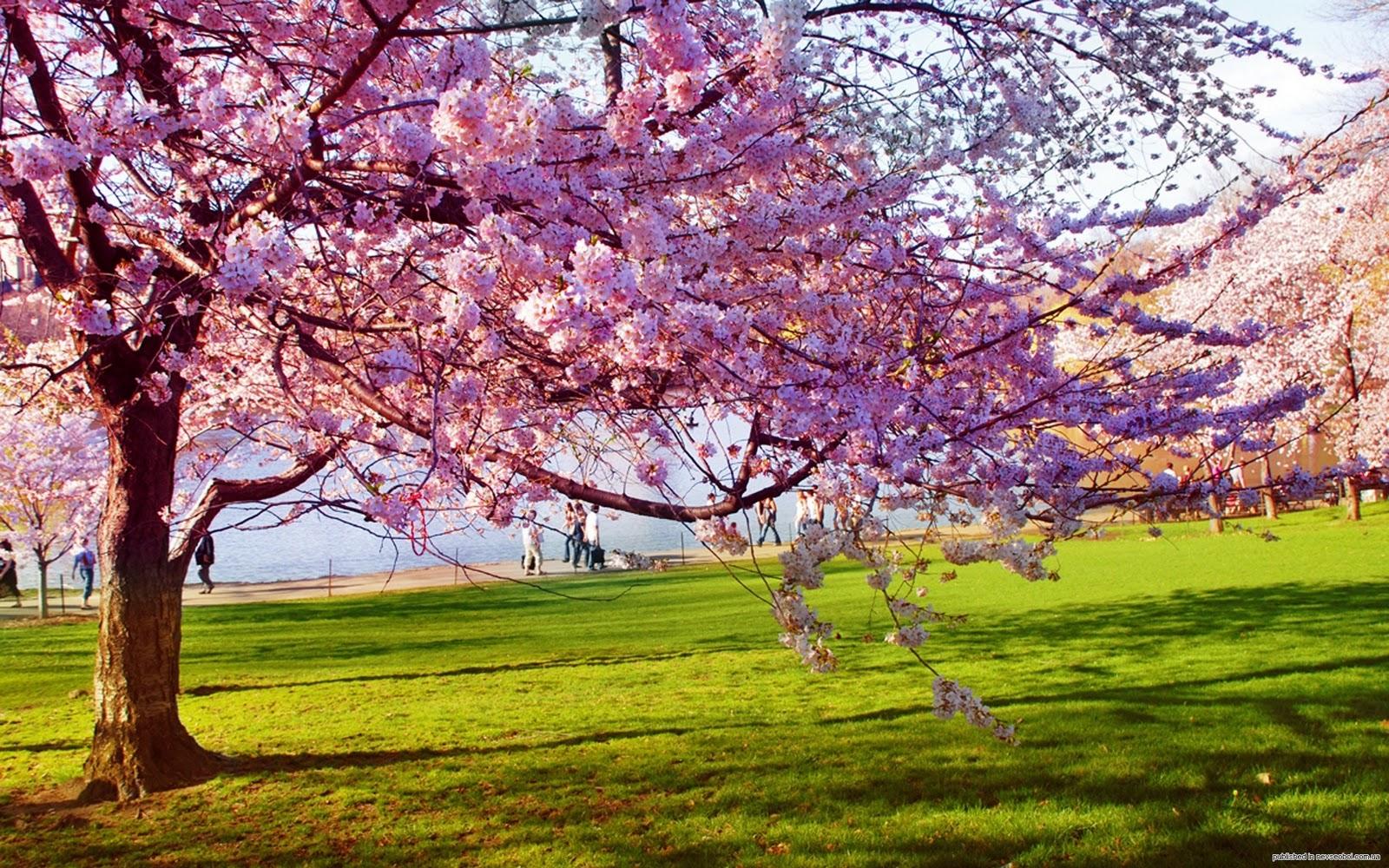 Download Spring Season Wallpaper HD 16335 Full Size 1600x1000