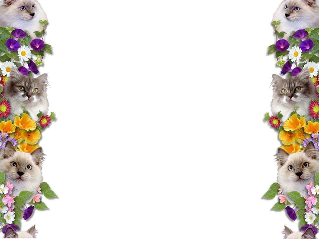 Border Wallpapers HD HD Wallpapers Pulse 1024x768