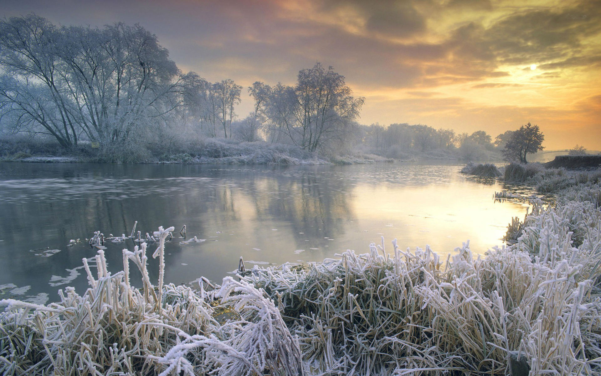 Morning Frost Wallpaper 1920x1200