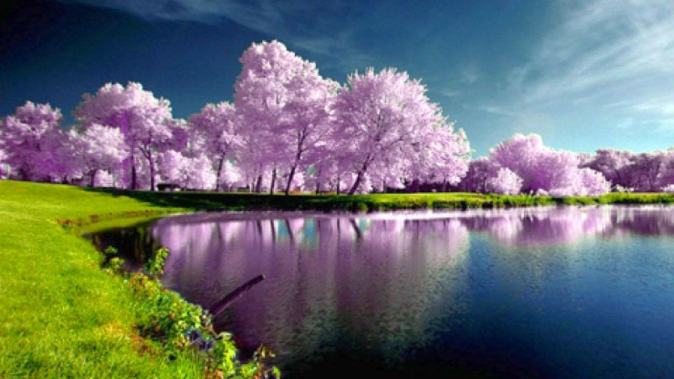 Beautiful Trees Spring Wallpaper 1366x768