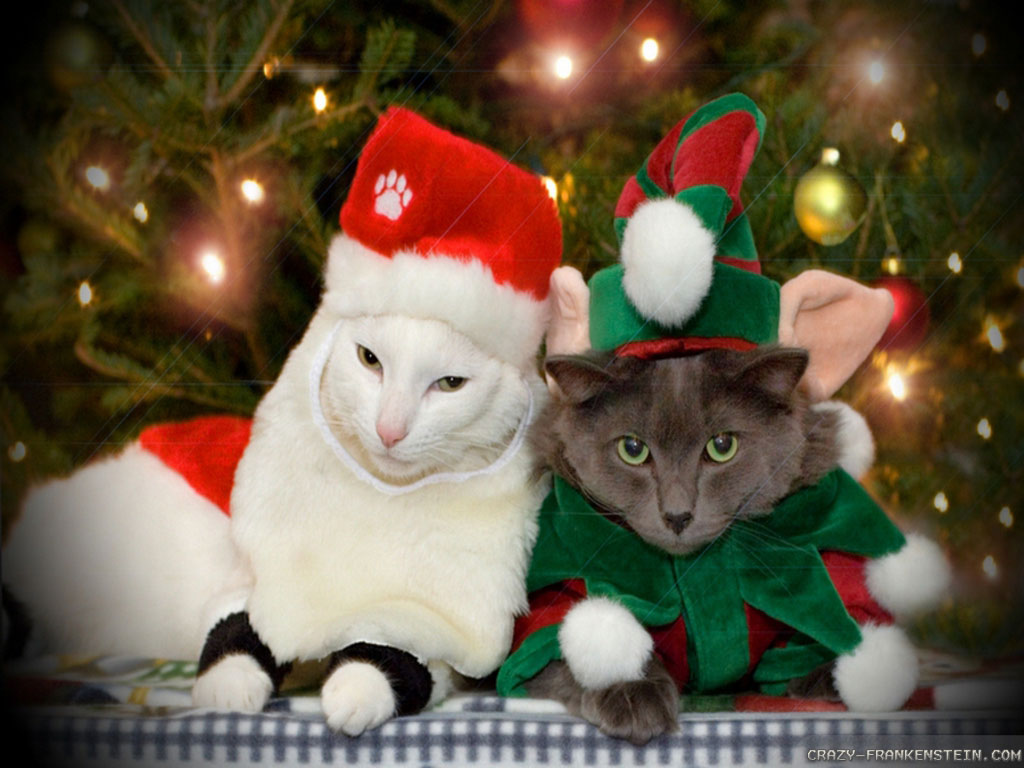 free christmas wallpaper with cats wallpapersafari