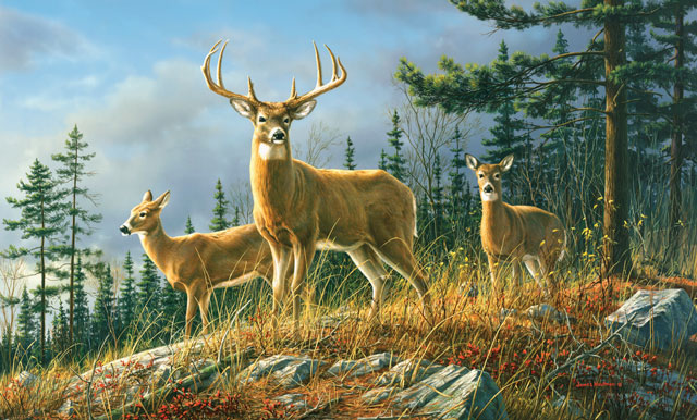 Environmental Graphics Autumn Whitetails Wall Mural 640x386