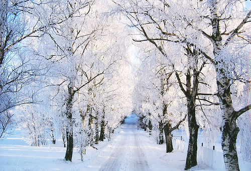 17 Snowy Tree Pictures 500x342