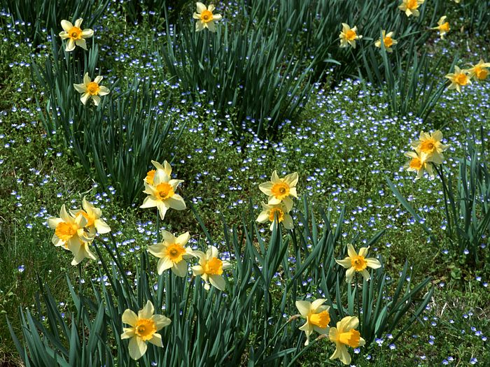 nature photography spring wallpapers nature spring scene wallpaper 700x525
