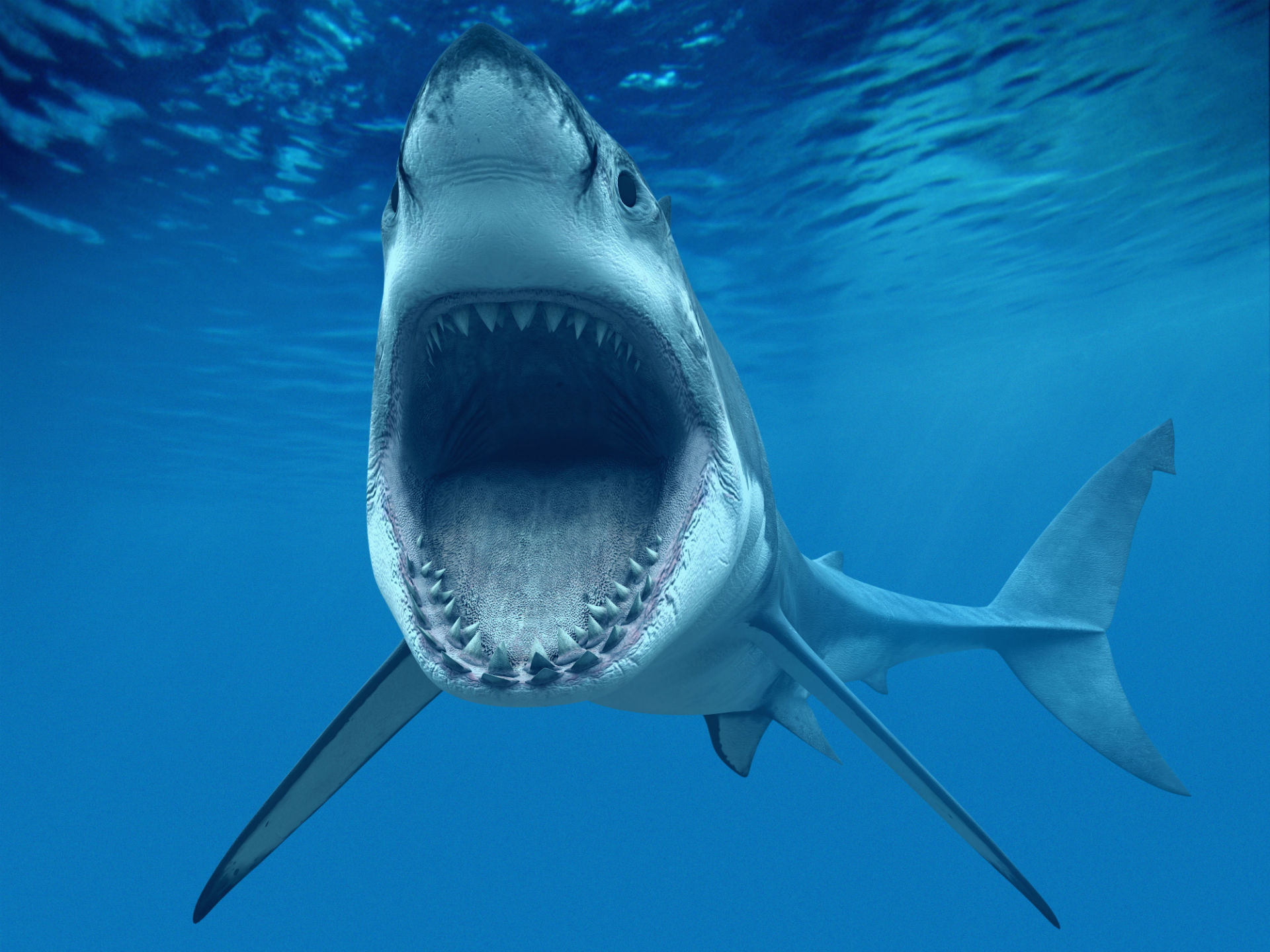 Shark Fish Great WhiteTeeth Underwater Blue Ocean CG wallpaper 1920x1440