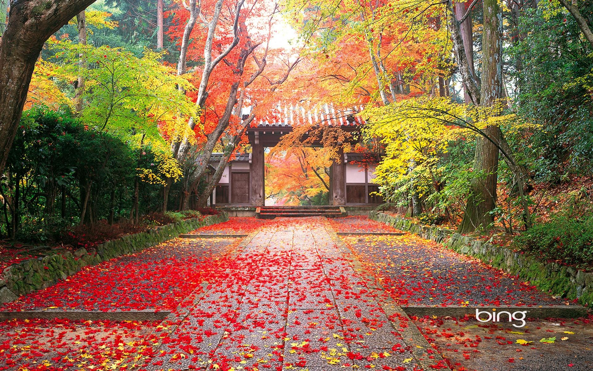 Autunno in Giappone percorso rosso Sfondi desktop WallpaperPixel 1920x1200
