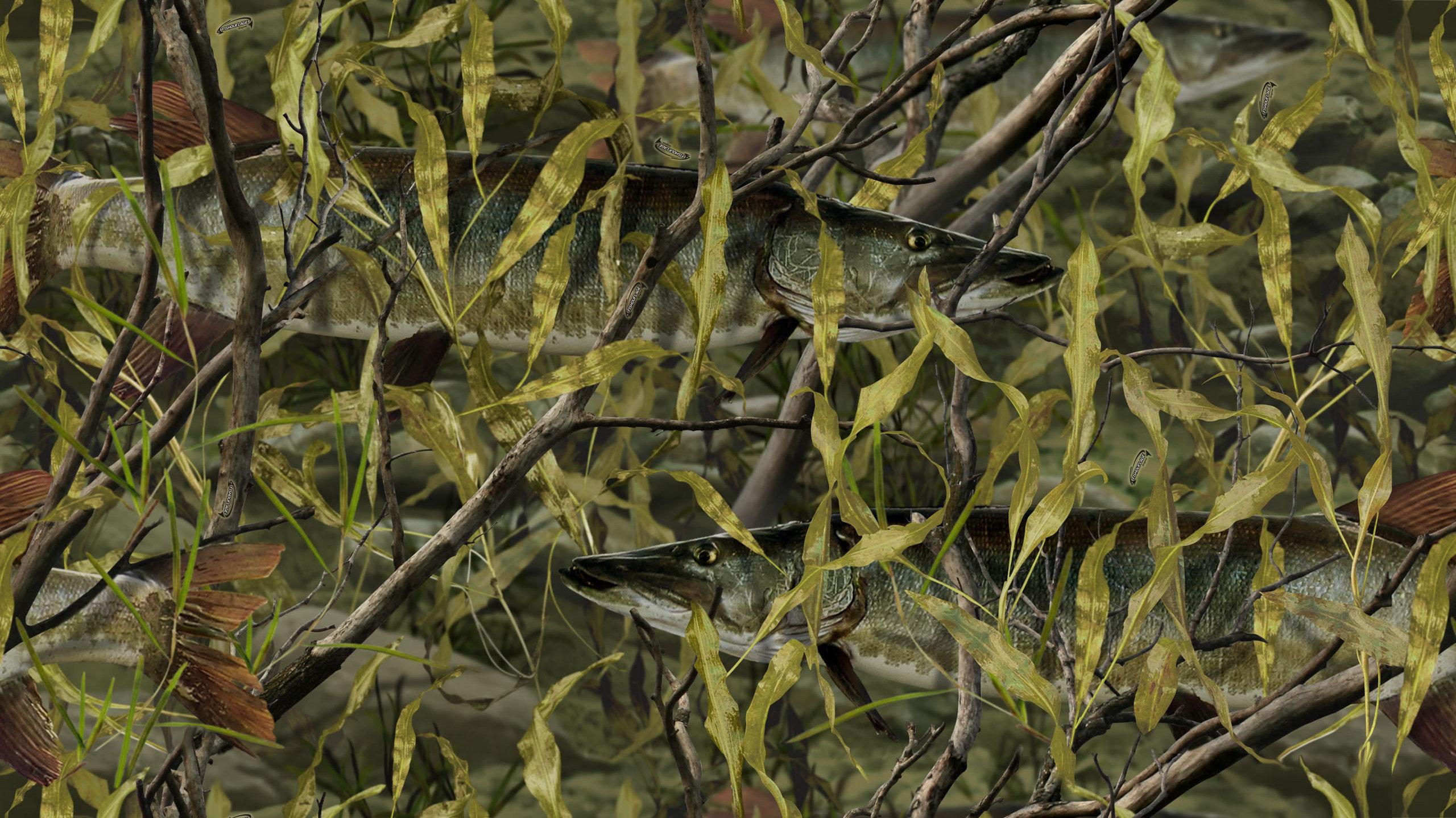 Fishouflage   Fishouflage Photo 23058211 2560x1438