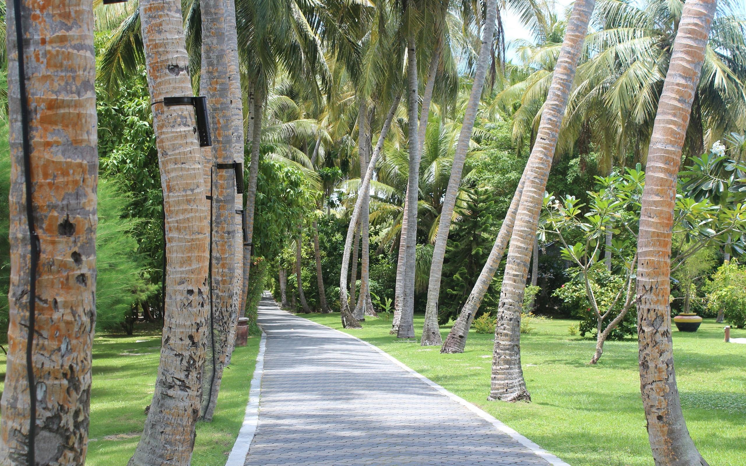 Download Palm trees wallpaper 2560x1600