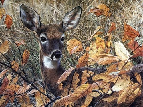Deer Screensaver Screensavers   Download Deer Screensaver 500x375