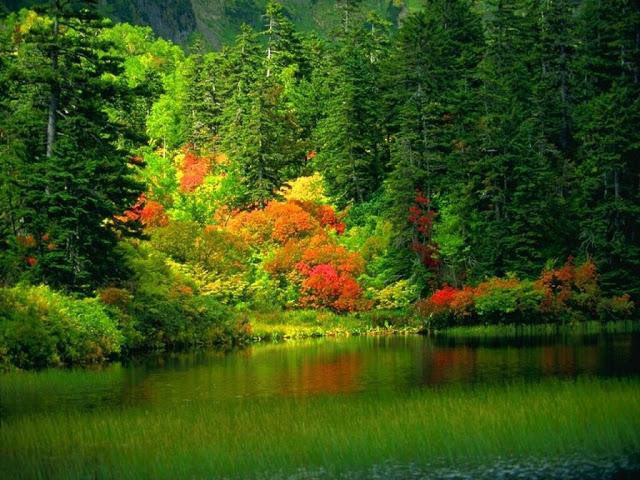 Wallpaper Originals provides original Nature desktop wallpapers 640x480