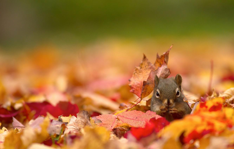 Wallpaper autumn protein bokeh fallen leaves images for desktop 1332x850