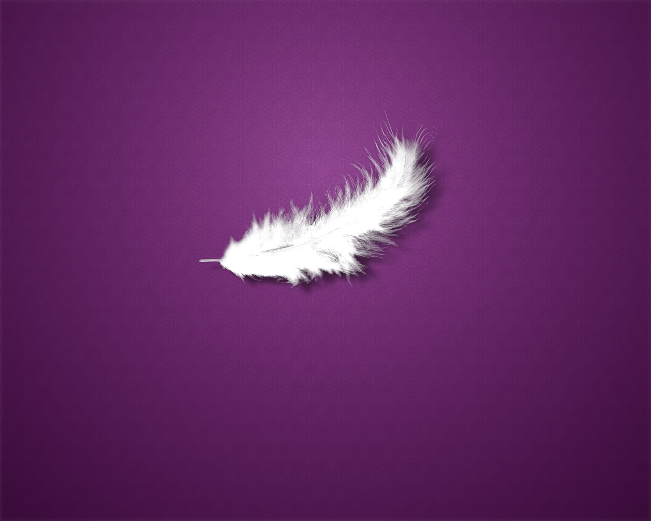 Beautiful Feathers Wallpapers and Pictures One HD 1280x1024