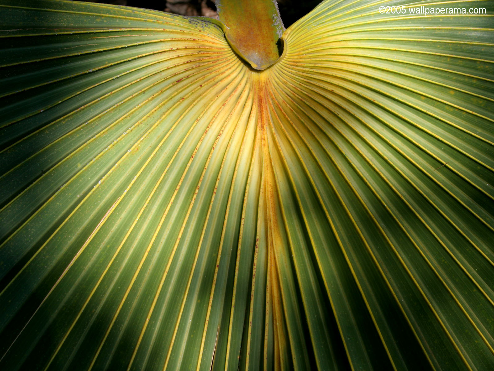 Palm Leaf Wallpaper HD Backgrounds Images Pictures 1600x1200