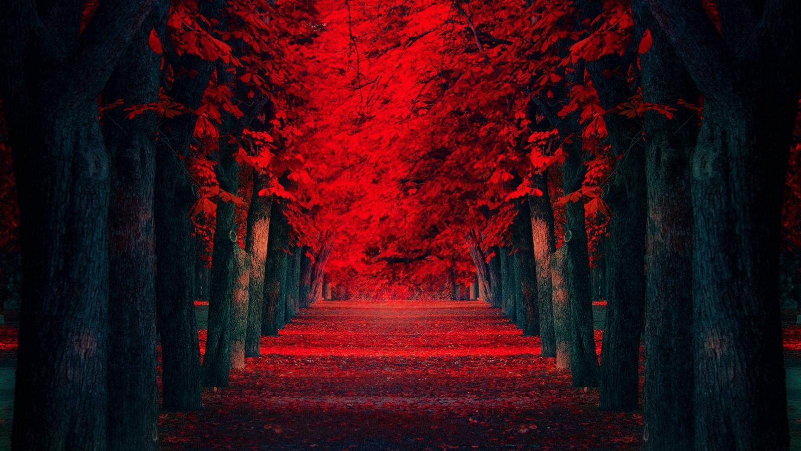 beautiful roses hd wallpapers free download