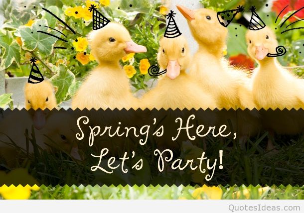 First day of spring quotes wallpapers and flowers photos 610x428
