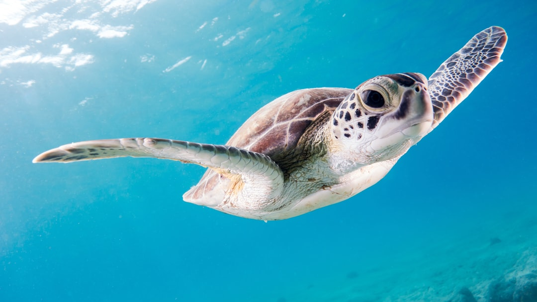 500 Turtle Pictures Download Images on Unsplash 1080x608