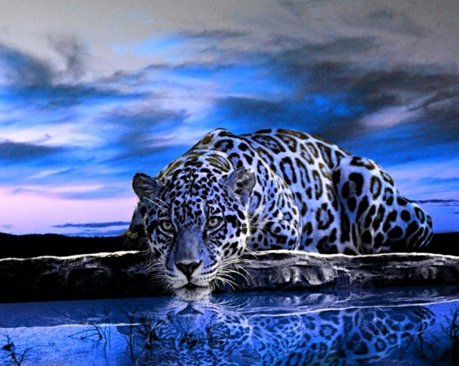 Animal Wallpapers Animal Kingdom Animal Planet Wallpapers 905x722