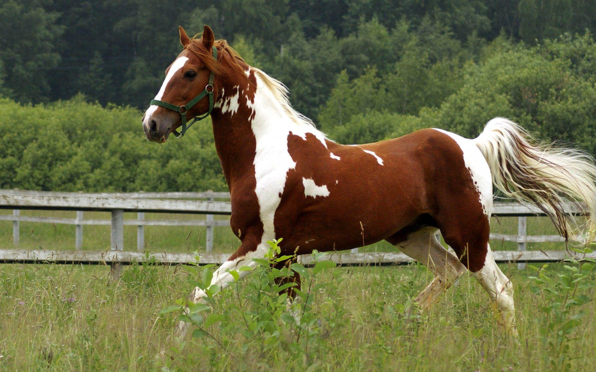 Download Horses 6713 1600x1200 px High Resolution Wallpaper 1920x1200