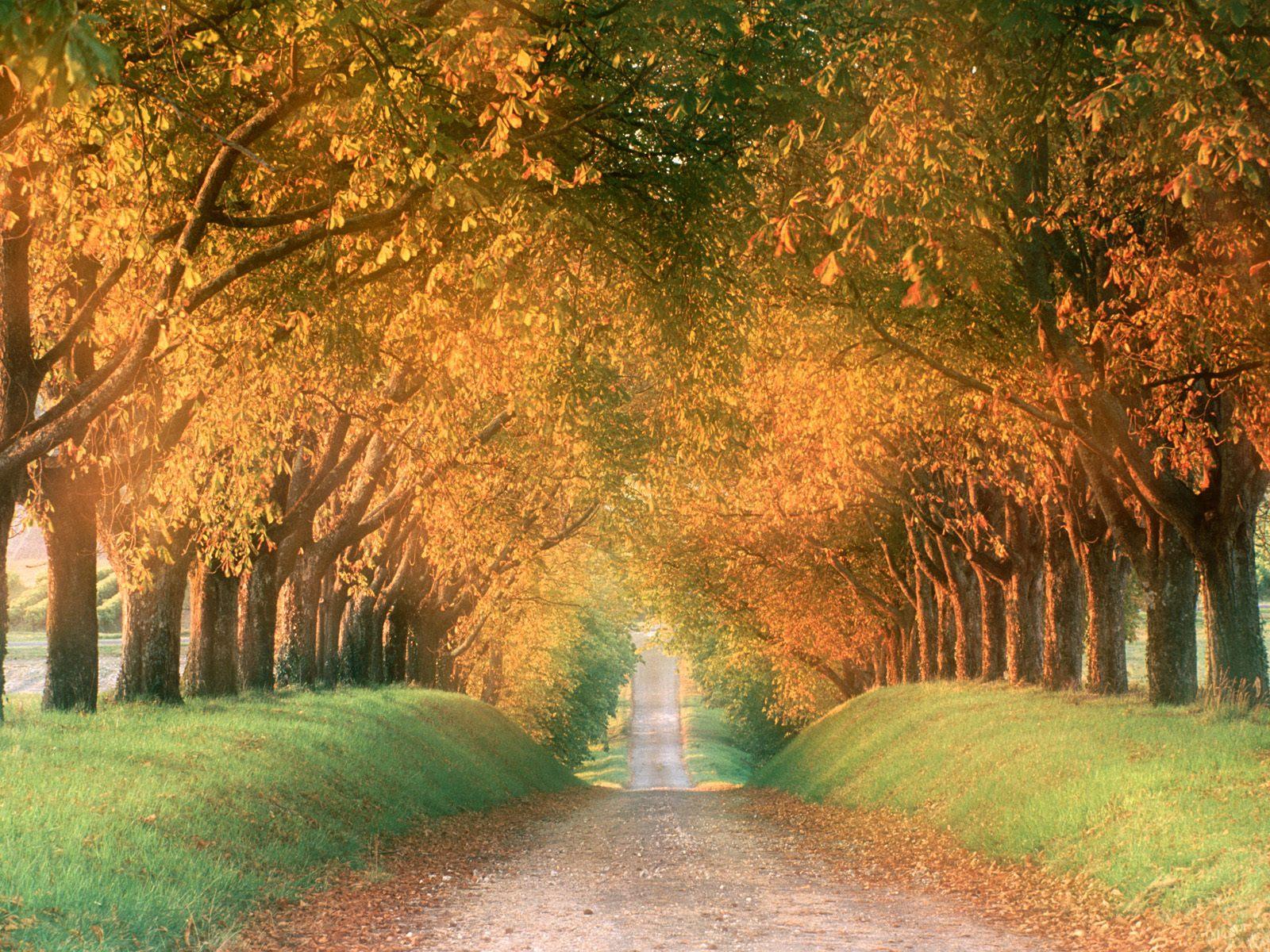 Autumn Road, Cognac Region, France