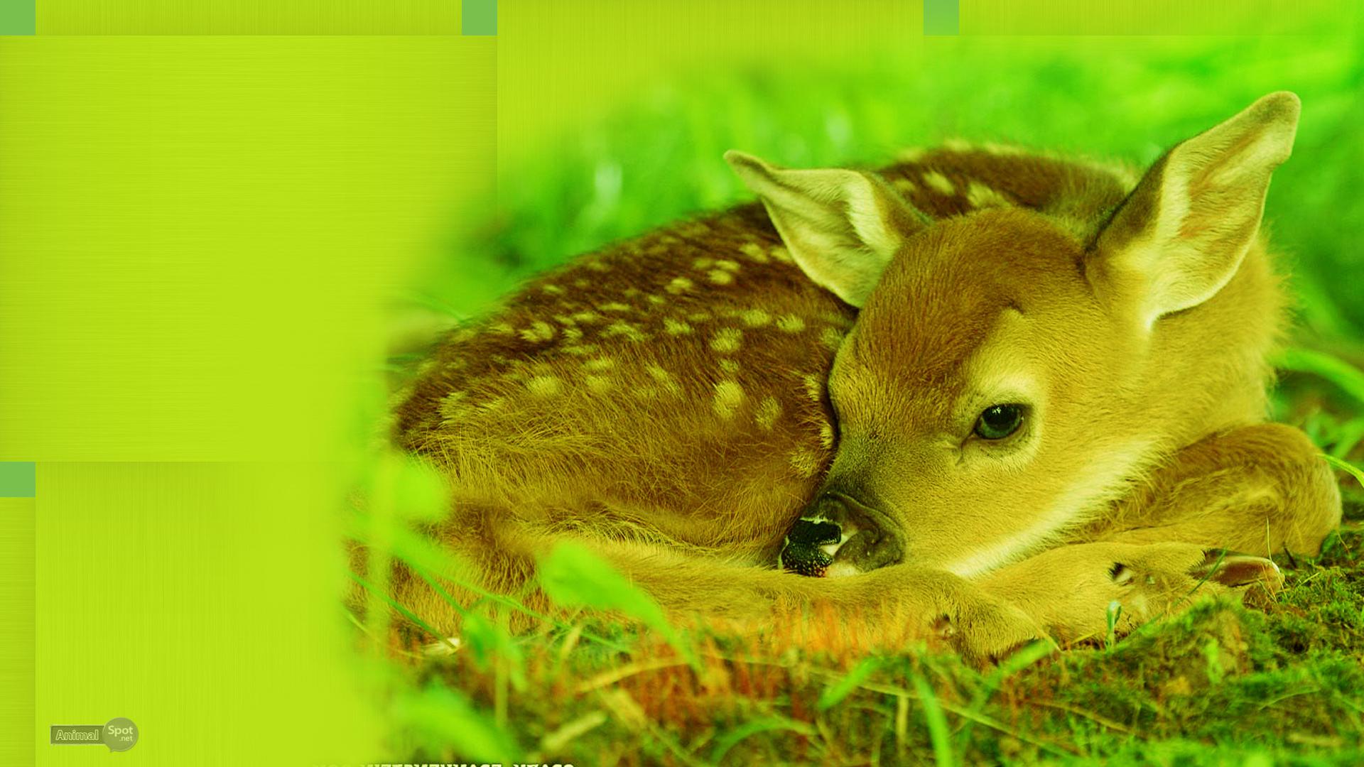 free deer wallpaper mule deer wallpaper wallpaper deer whitetail deer 1920x1080