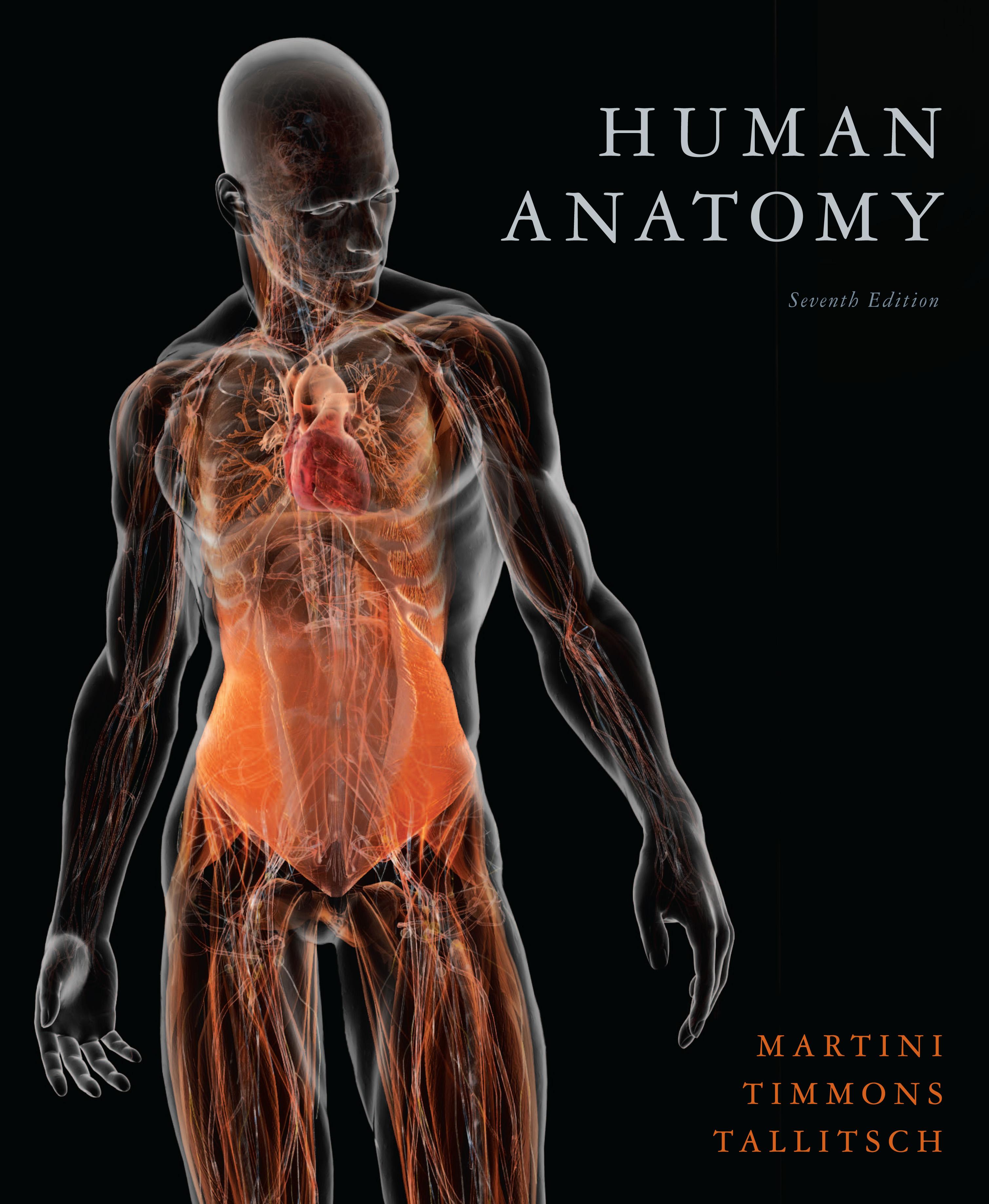 Images Of Human Anatomy Wallpaper Spacehero