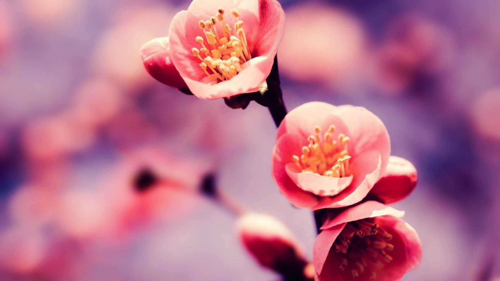 Spring Desktop Backgrounds AirWallpaperCom 1920x1080