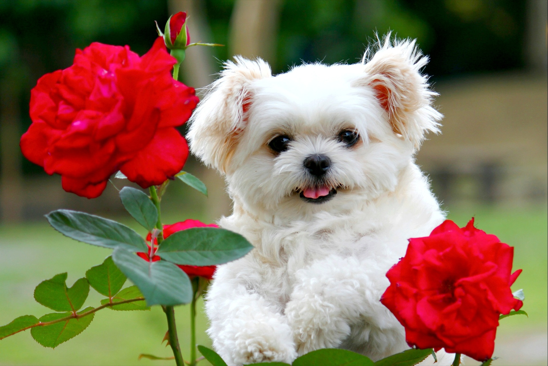 1920x1281px Puppies In Flowers Computer Wallpaper Wallpapersafari